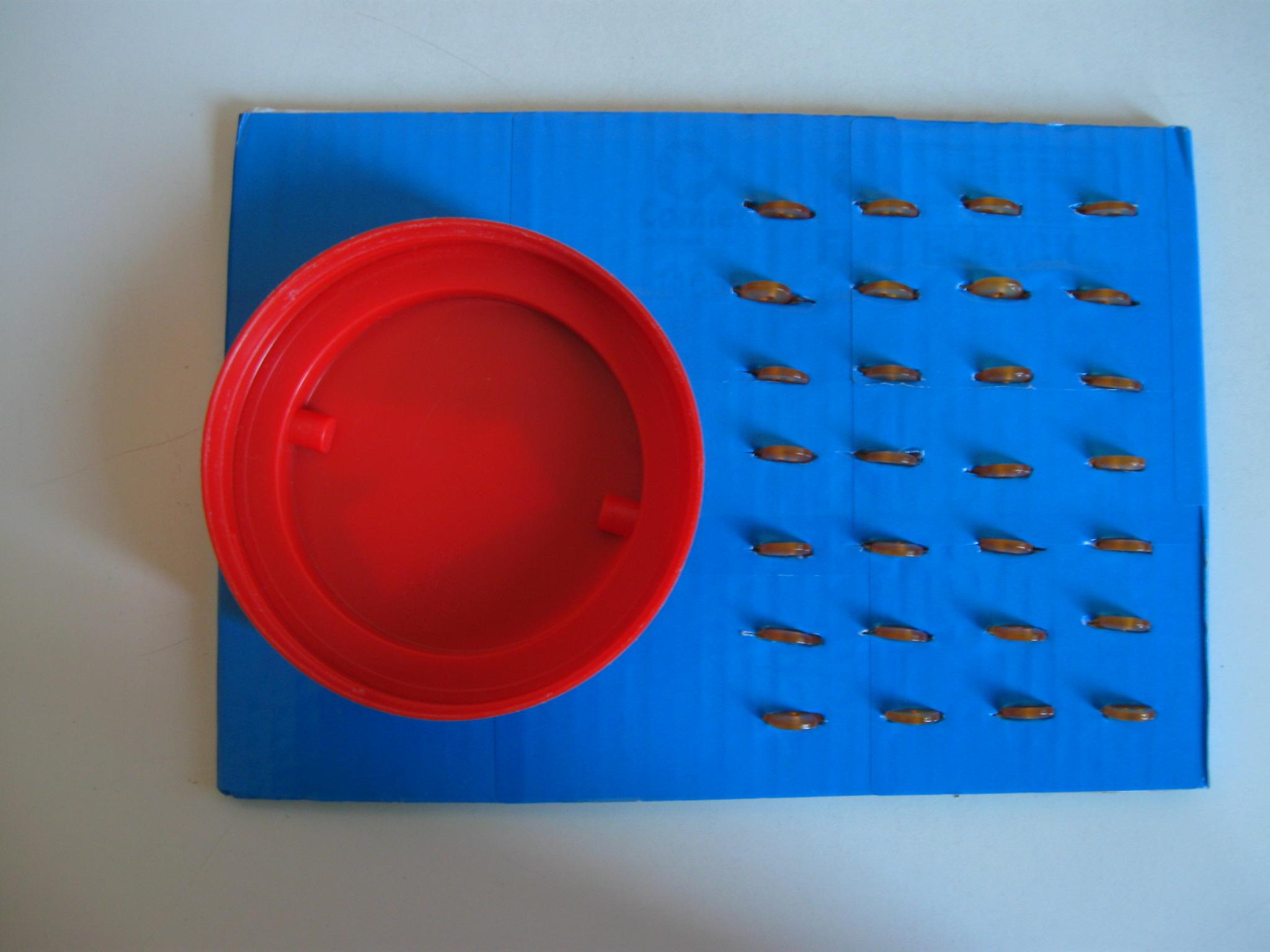 Cartone con attaccata una vaschetta a sinistra e incastrati 28 bottoni a destra.
